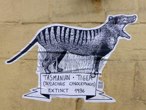 Thylacine Walden
