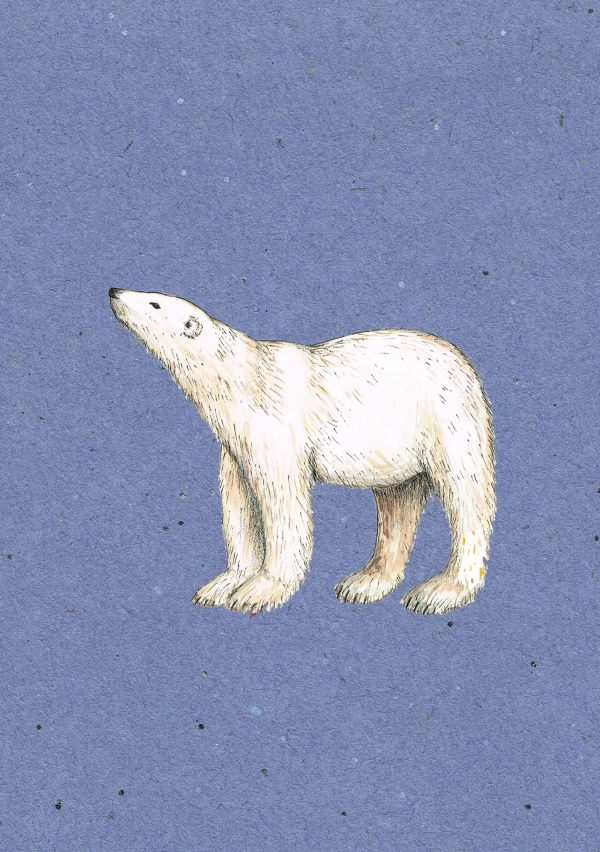 watercolour of a bear