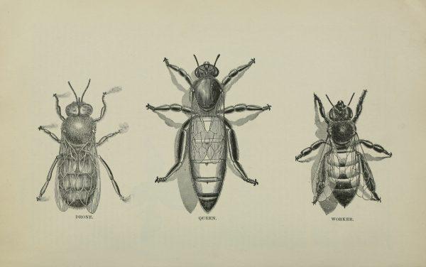 bees diagram