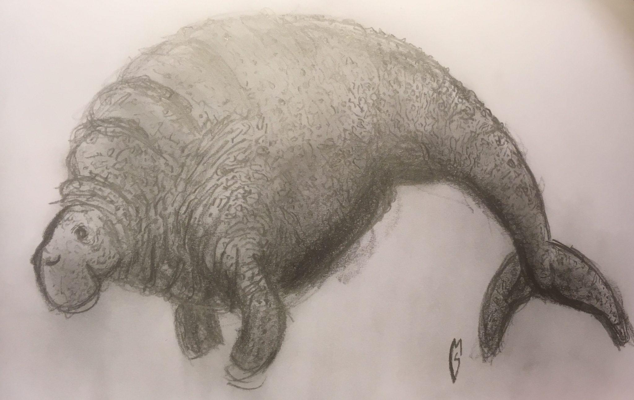 pencil sketch of extinct giant sea cow