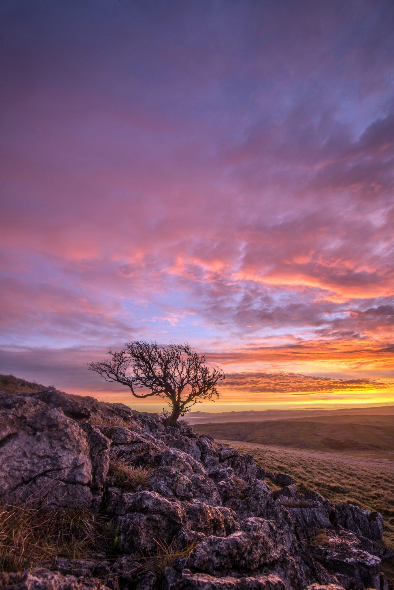 photo of tree at sunset
