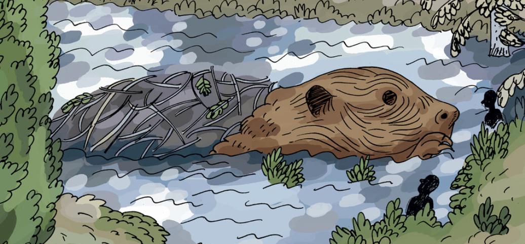 illustration/ cartoon of a beaver