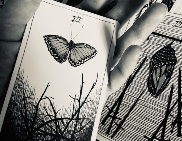 photo of Wild Unknown tarot card with image of butterfly