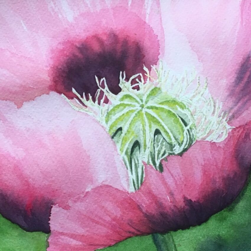 painting of pink poppy