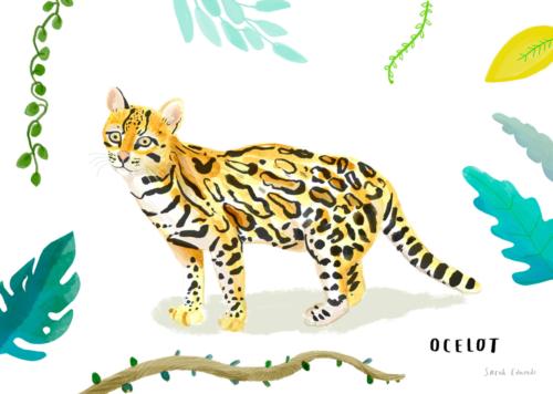 ONCA Jungle Cat