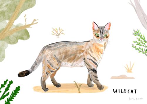 ONCA Wildcat