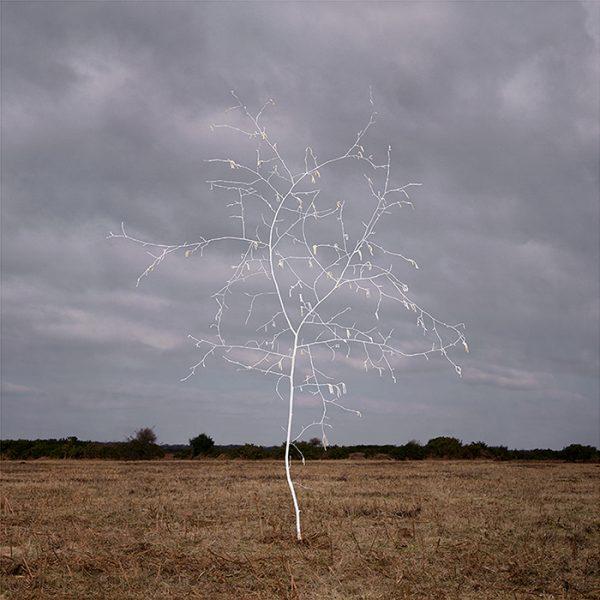 'Smoke and Mirrors – Heathland Series no.2' by Ellie Davies