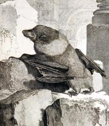 antique print of an extinct bat