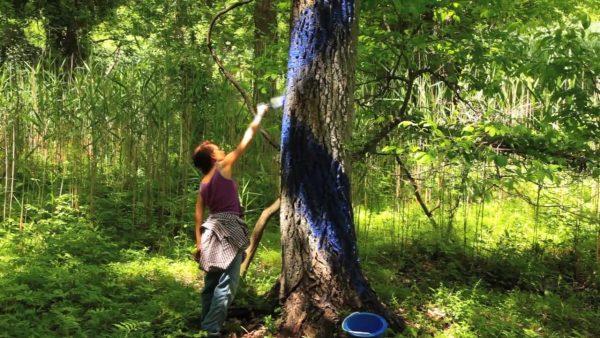 Aviva Rahmani - Blued Trees
