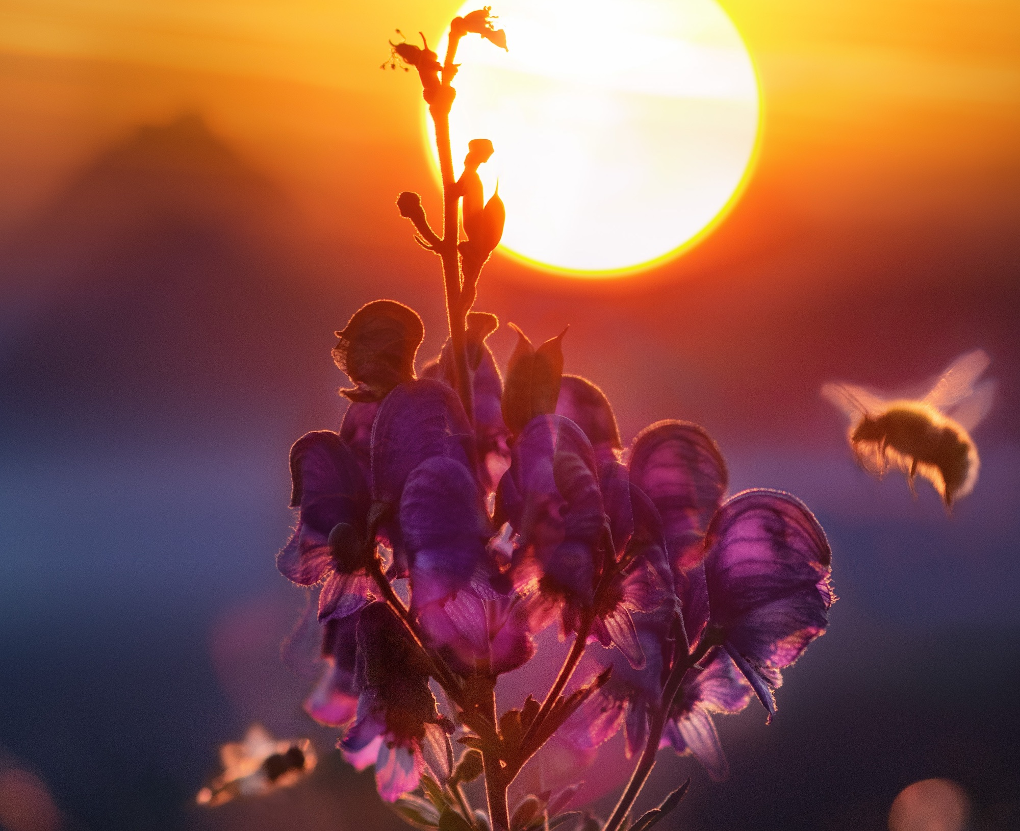 image of flower with bees