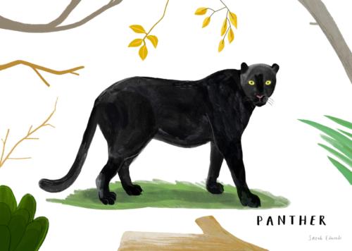 ONCA Big Cat